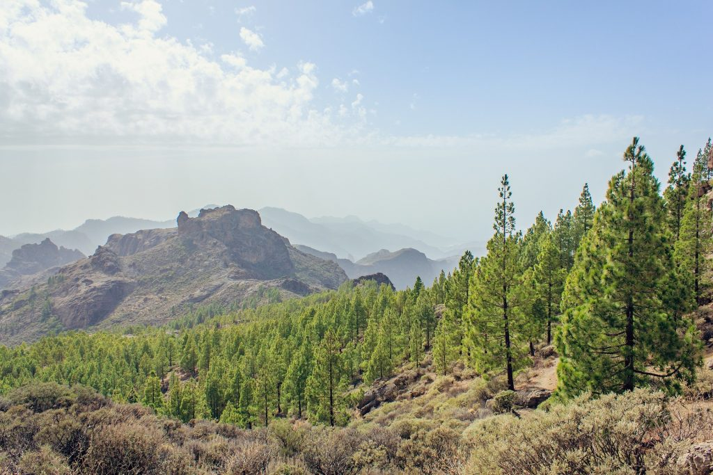 The mountains and forests of Gran Canaria.